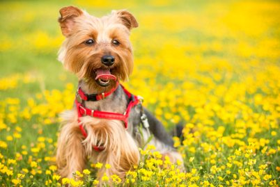 adorable-animal-canine-179107.jpg