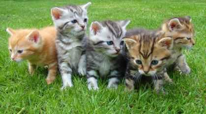 kittens-cat-cat-puppy-rush-45170.jpeg