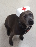 NurseShera