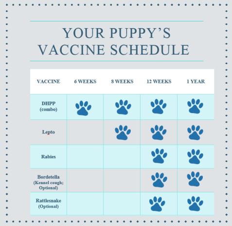 Puppy Kitten Info Mannford Animal Clinic